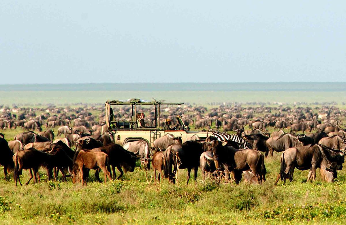 Serengeti-Safari-Camp-game-drive-Nomad-Tanzania-travelmodus