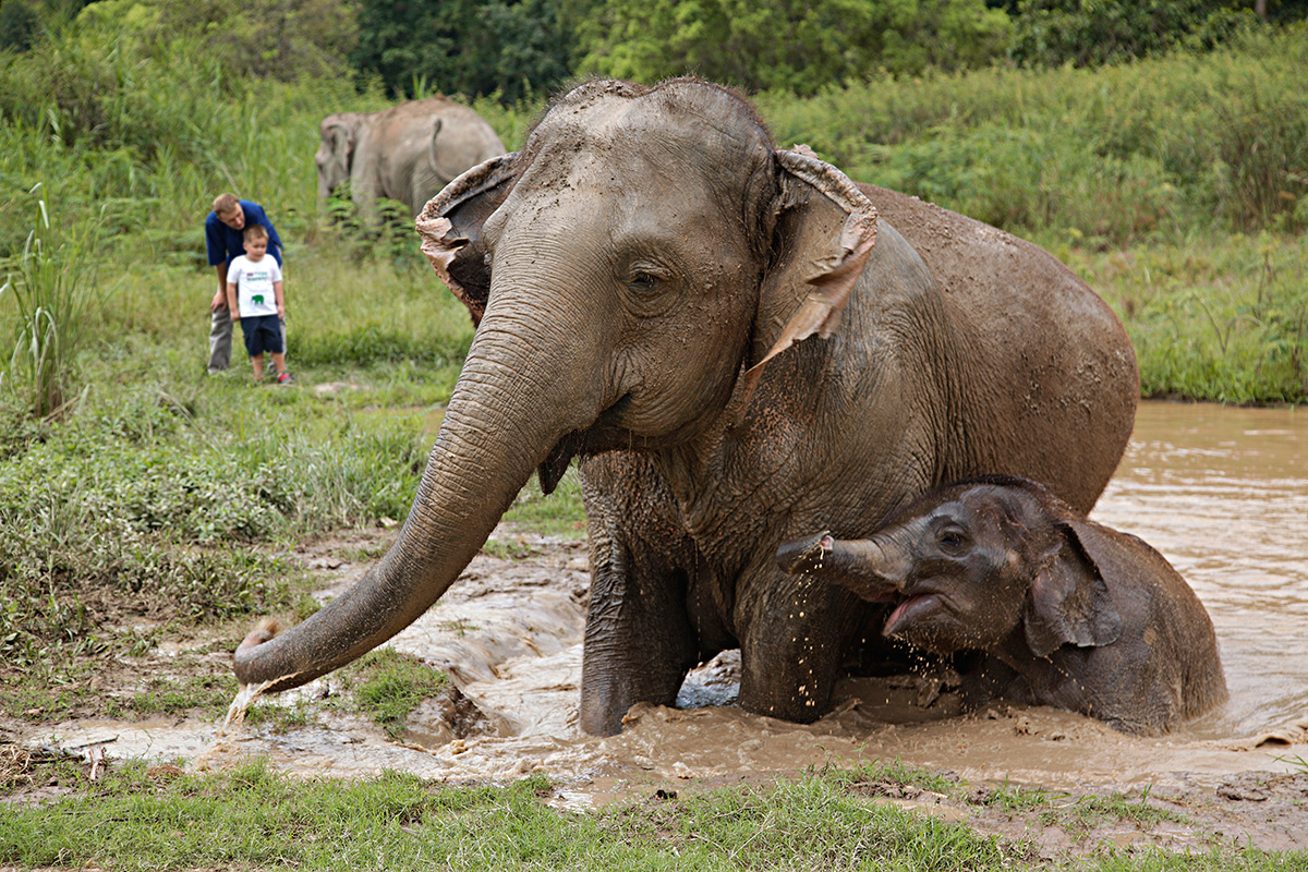 A northern thailand tale chiang rai and chiang mai travelmodus anyone who visits thailand quickly learns that thais hold a special place in their hearts for elephants famous symbols of the country elephants were once buycottarizona